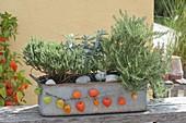 Zinkkasten mit Kräutern : Thymian (Thymus vulgare), Salbei