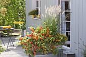 Herbstlich bepflanzter Kasten als Sichtschutz