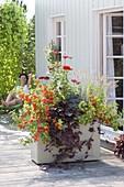 Fahrbarer Kasten herbstlich bepflanzt als Sichtschutz