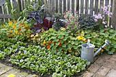 Spaetsommerliches Gemüsebeet im Biogarten