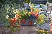 Herbstlich bepflanzter Schieferkasten auf Gartenmauer