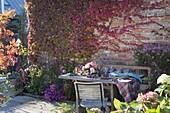 Herbstliche Tischdeko mit Weintrauben (Vitis vinifera), Rosa (Rosen)