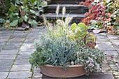 Terracotta - Schale mit Sukkulenten und Gras