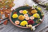 Blüten von Chrysanthemum (Herbstchrysanthemen), Schwimmkerzen