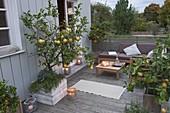 Zitrusterrasse mit Abendstimmung : Citrus limon