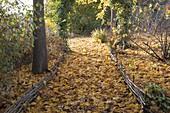 Herbstlicher Waldweg mit Herbstlaub