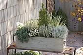 Grau-weiss bepflanzter Holzkasten mit Calluna 'Alicia' (Knospenheide)