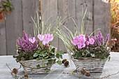 Körbe mit Erica gracilis 'Beauty Queens' (Topferika), Cyclamen