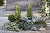 Flacher grauer Betonkasten als Mini-Garten bepflanzt