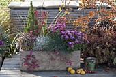 Selbstgebauter Holzkasten herbstlich bepflanzt : Chrysanthemum