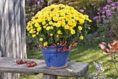 Chrysanthemum (Herbstchrysantheme) mit Malus (Zieraepfelchen)