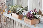 Herbstlich bepflanzte Terracotta - Kästen am Fenster