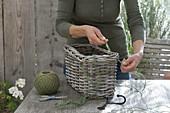 Korbkasten als Ampel mit Pelargonium peltatum Ville de Paris