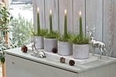 Adventsgestecke aus grünen Kerzen und Pinus (Kiefer) in Betontoepfen