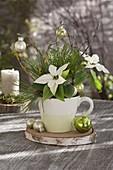 Kleiner Weihnachtsstrauss aus Euphorbia pulcherrima (Weihnachtsstern