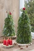 Gebundene Weihnachtsbaeumchen aus Abies (Tanne) auf Holzscheiben