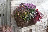 Herbstlich bepflanzter Korbkasten : Chrysanthemum (Herbstchrysanthemen)