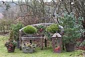 Bank weihnachtlich dekoriert : Pinus parviflora 'Negishi'