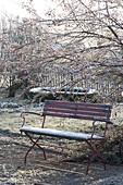 Winterlicher Garten mit roter Bank unter Malus (Zierapfelbaum)