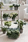 Regal mit weissen Pflanzen als Raumteiler