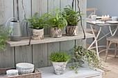 Zimmerpflanzen in Toepfen mit Birkenrinde, hängendes Brett spart Platz