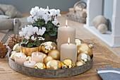 Cyclamen persicum (Alpenveilchen) weihnachtlich mit goldenen Kugeln