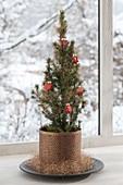 Picea glauca 'Conica' (Zuckerhutfichten) im kupfernen Übertopf