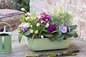 Auflaufform mit Frühlingsblumen : Primula acaulis (Primeln), Muscari