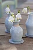 Blüten von Leucojum (Märzenbecher) in Keramik-Vasen