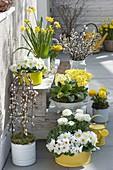 Frühling in gelb-weiss auf der Terrasse
