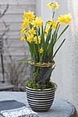 Narcissus 'Tete a Tete' (Narzissen) mit Weidenkraenzchen und Federn