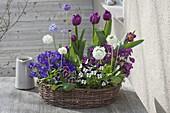 Korbkranz bepflanzt mit Viola cornuta (Hornveilchen), Tulipa