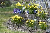 Frühlingserwachen in blau-gelb