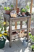 Pflanztisch im Gewächshaus mit Jungpflanzen und Utensilien zur Aussaat