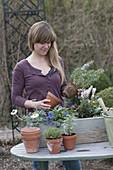 Frau bepflanzt Holzkasten mit Stauden und Kräutern