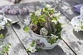 Kleine Osterdeko mit Anemone nemorosa (Buschwindröschen) in Tasse
