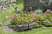 Fruehlingsbeet mit Tulpen