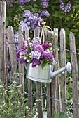 Giesskanne zweckentfremdet als Vase : Syringa (Flieder)