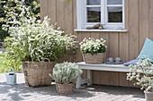 Terrasse weiss und silbergrau bepflanzt : Spiraea arguta (Brautspiere