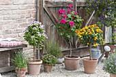 Kiesterrasse mit Kuebelpflanzen und Kräutern in Terracottatoepfen