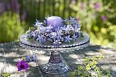 Kränzchen aus Campanula (Glockenblume) auf Tortenplatte mit Fuss
