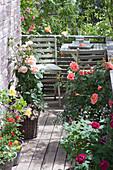 Kleiner Rosenbalkon mit Sitzecke : Rosa (Rosen, Zwergrose)