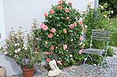 Rosen an der Hauswand