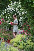 Rosa 'Unschuld' (Kletterrose) am Rosenbogen