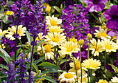 Komplementärfarben lila-gelb Bl 01