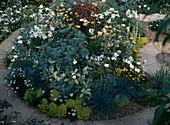 Salvia, Mimulus, Dimorphoteca, Argyranthemum,Eberraute