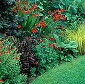 SECTION of Red BORDER with CROCOSMIA 'LUCIFER', PAPAVER COMMUTATUM 'LADYBIRD' AND Carex STRICTA ('BOWLES Golden'). SWINTON LANE, WORCS.