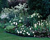 White ROSE,Iris 'White Swirl',LILIUM LONGIFLORUM & HOSTAS THE TELEGRAPH GARDEN. CHELSEA'95. Designer: A.LENNOX-Boyd