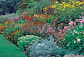 THE HERBACEOUS BORDER at THE PRIORY, KEMERTON, HEREFORD & WORCESTER. HELENIUMS, DAHLIAS, SEDUMS,