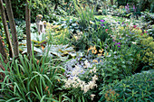 POND; WATERSIDE PLANTING of RHEUM PALMATUM, HOSTAS, White ASTILB, Iris PSEUDACORUS & EUPHORBIA GRIFFITHII.ASHTREE COTTAGE.